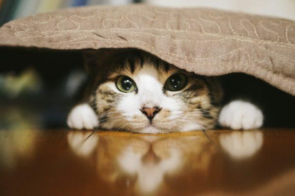 人の様子をうかがう猫
