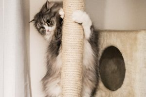 猫タワーの上から下の様子をうかがうねこ