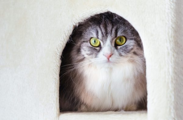 ハウスからこちらをじーっと見つめるねこ